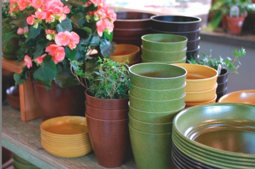 Ecopots biodegradable pots